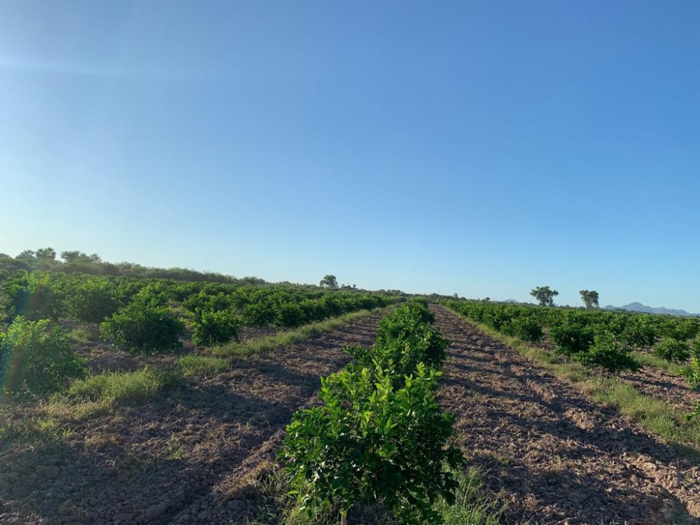 130 Mexico Ideas In 2021 Mexico Mexico Real Estate Land For Sale