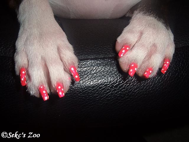 This Is Actually A Tutorial On How To Give Your Dog A Manicure Poor Dog Dog Nails Dog Nail Art Fancy Dog