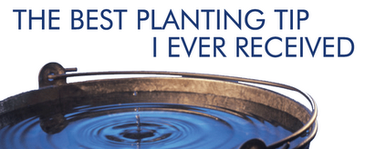 grounded design by Thomas Rainer: The Best Planting Tip I Ever Received