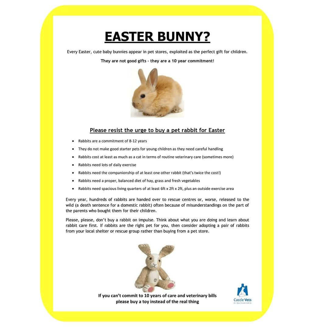 Please Don T Buy Pet Rabbits For Children At Easter Bunnies Are A 10 Year Commitment Need Lots Pet Rabbit Buy Pets Cute Baby Bunnies