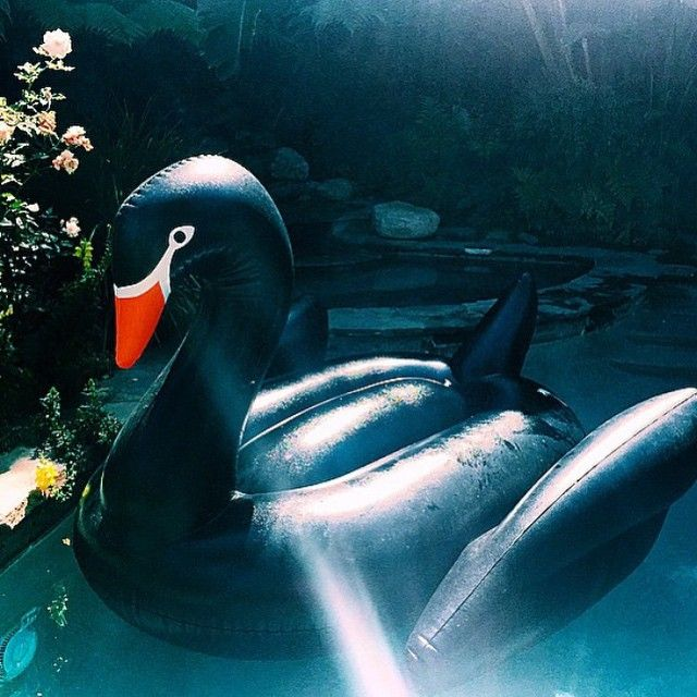 Black Swan Funboy Com Pool Floats Swan Float Pool Toys