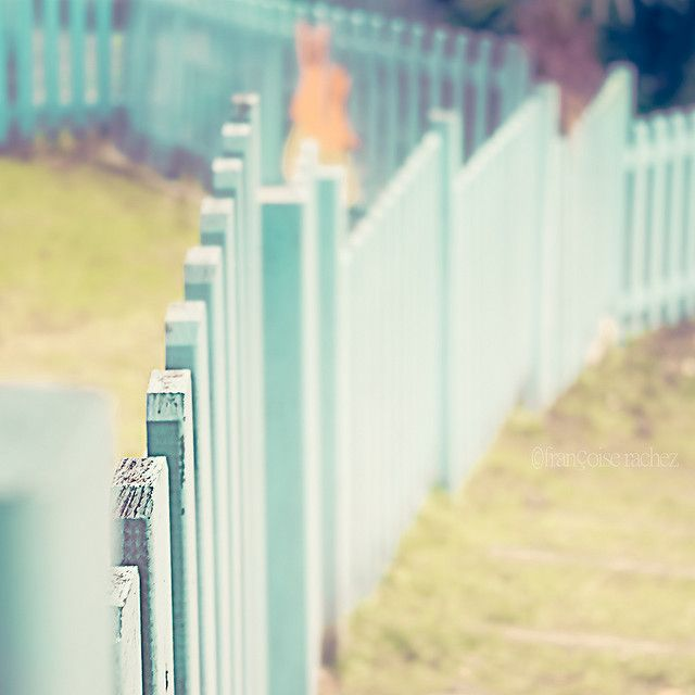 Turquoise Fence... love the small depth of field #fence #turquoise #photography