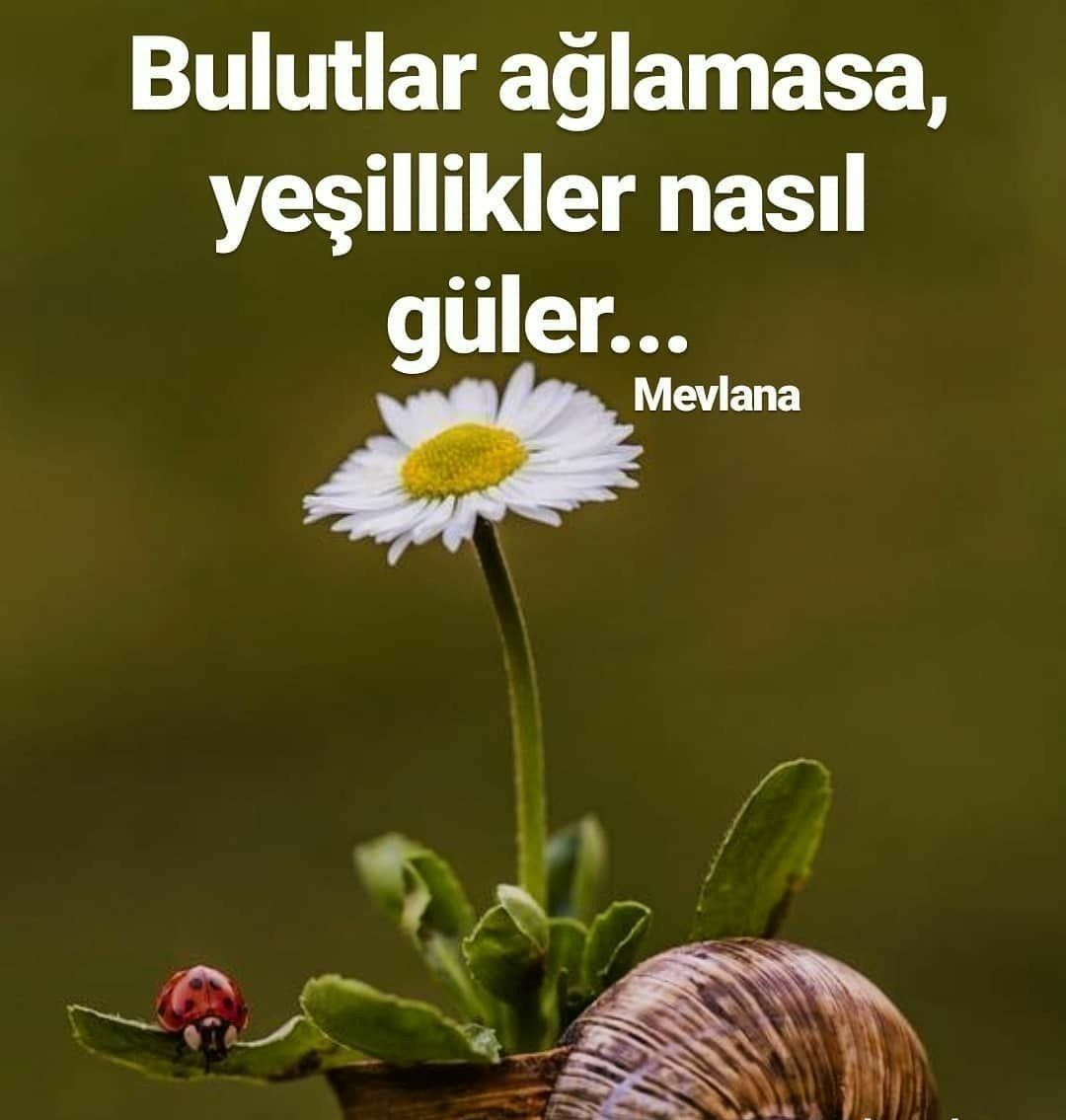 Mevlana Guzel Sozler Meaningful Words Words Quotes