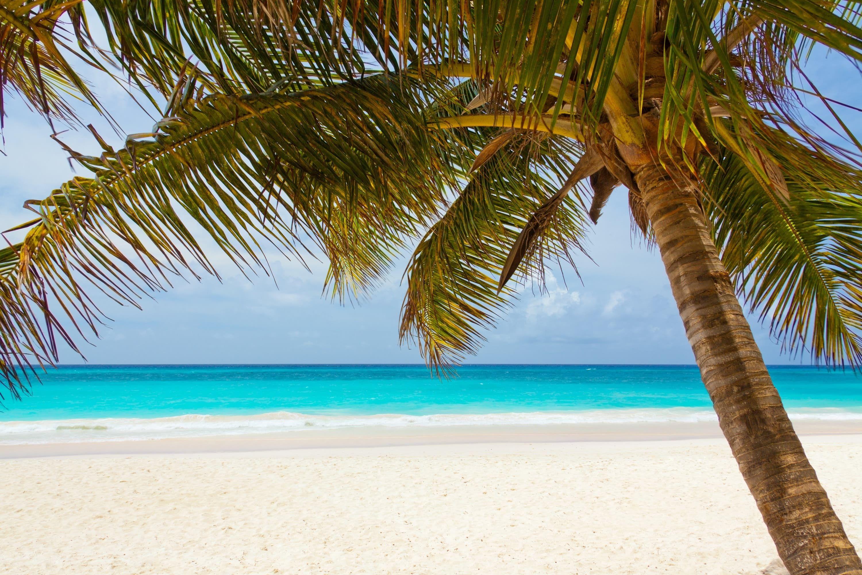 Beach with palm tree Beach palm tree Beach, Vacation