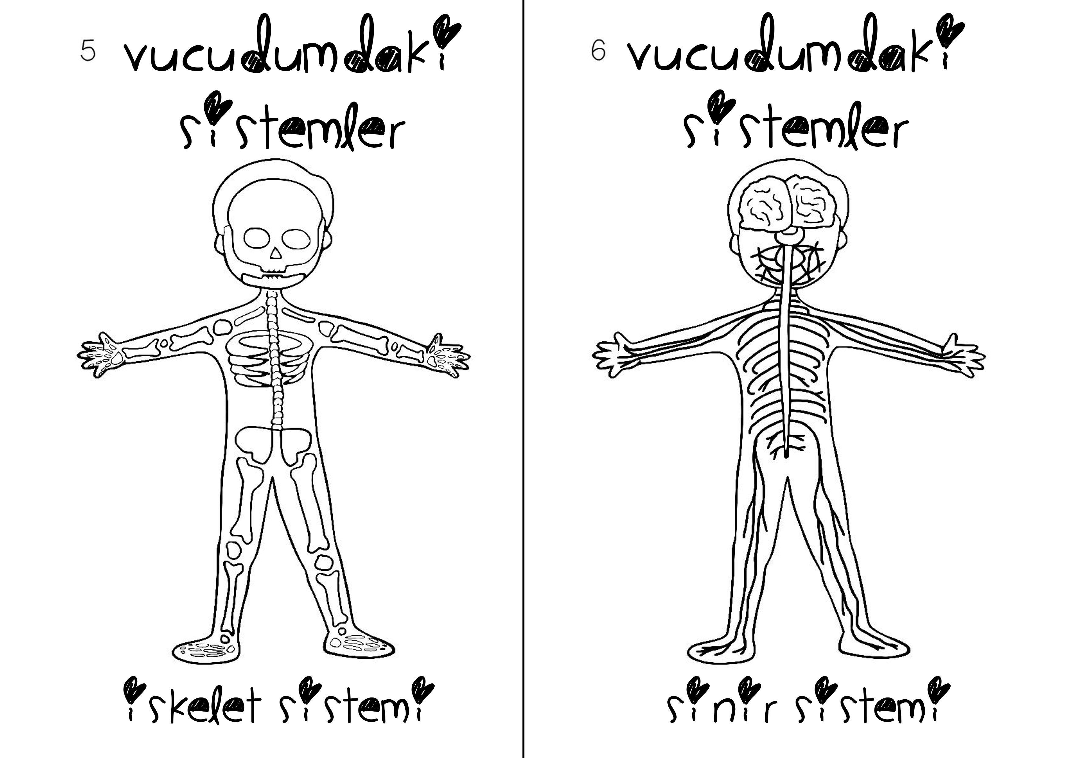 Emel Uyar Adlı Kullanıcının Vücudumuz Panosundaki Pin Pinterest