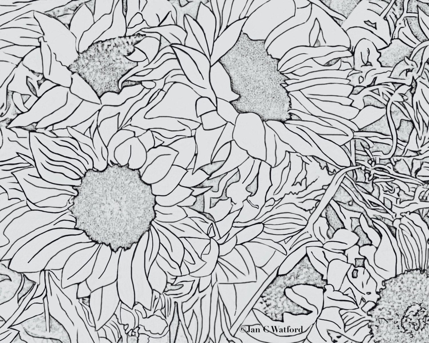 coloring pages sunflowers1 by jcwprism on etsy my shop