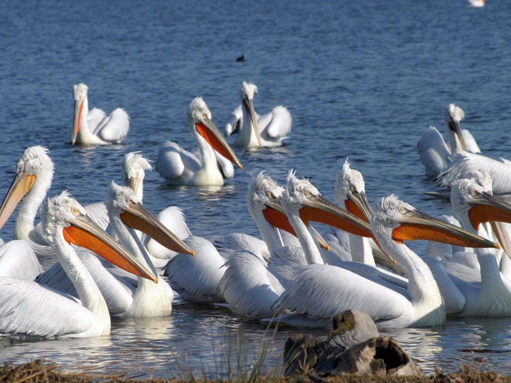 #Lake #Volvi is 22 km from the region of #Asprovalta – Nea #Vrasna