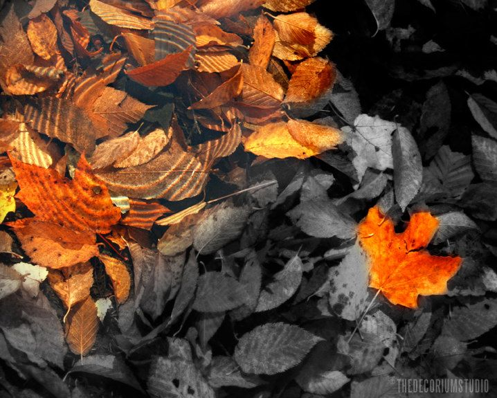 autumn leaves in the water,,,color splash,,,