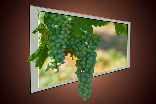 Wine, Grapes, Fruit, Vine, Winegrowing, Autumn