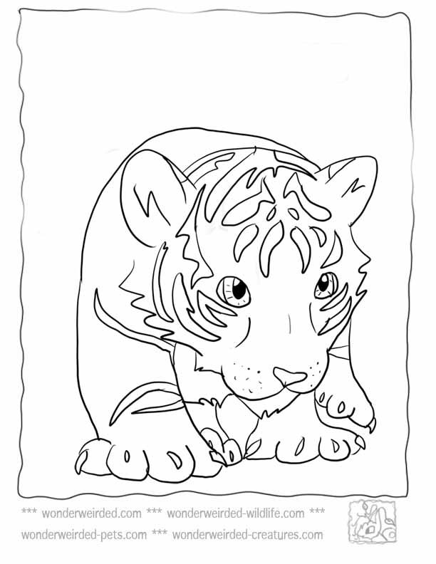 Tiger Pictures For Kids Coloring Pages Cute Coloring Pages Tiger Pictures