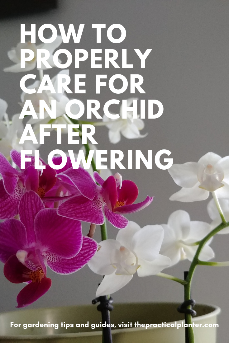 How To Properly Care For An Orchid After Flowering The Practical Planter In 2020 Orchid Care Cymbidium Orchids Care Orchids