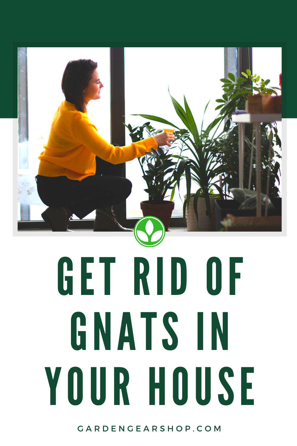 Get Rid of Gnats in House Plants in 2020   House plant ...