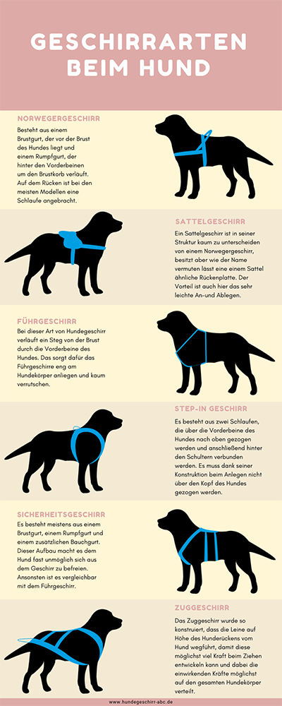 Photo of The most important dog harness types: These models you should …