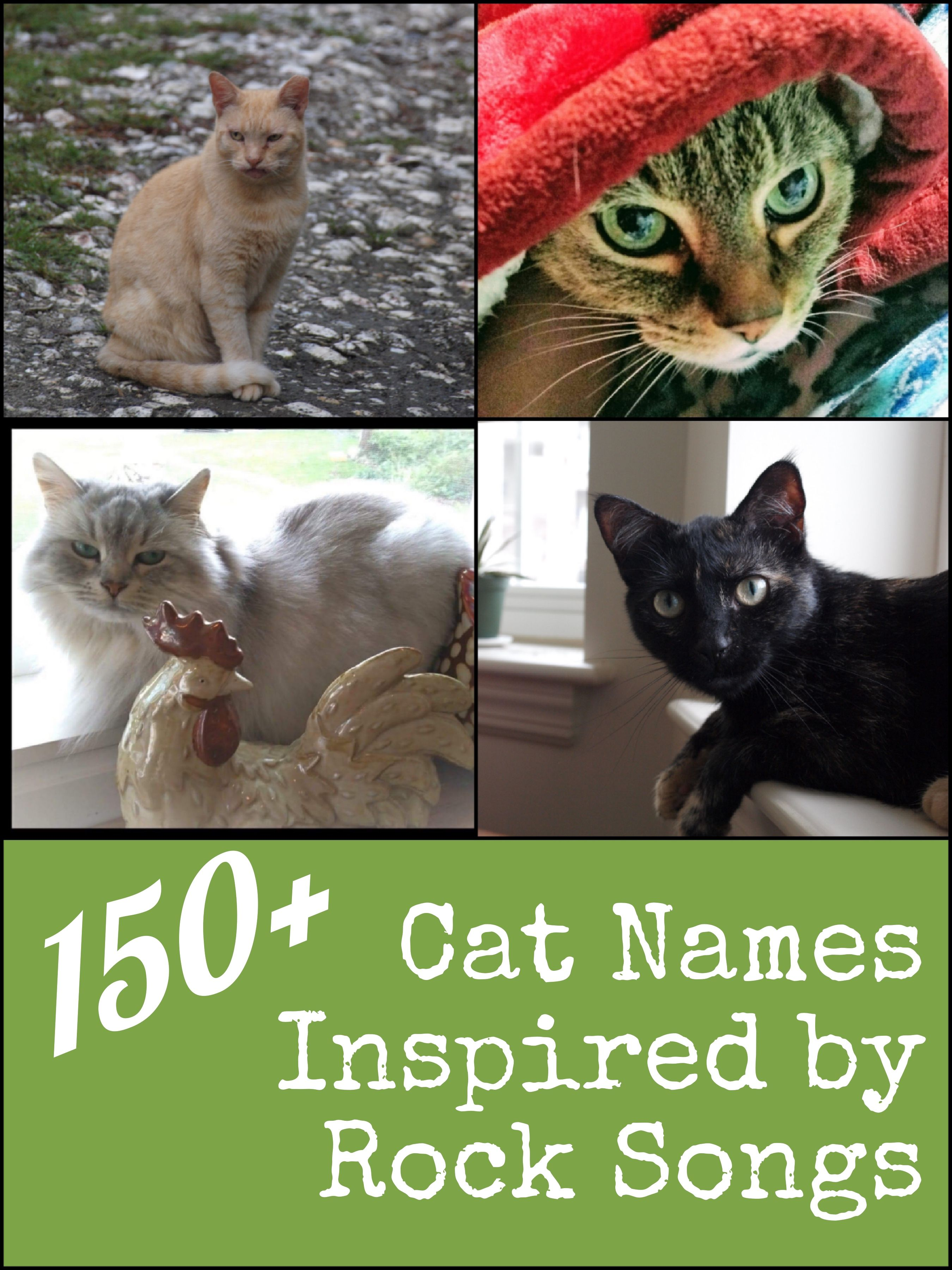 150 Cool And Unique Cat Names Inspired By Rock Music Songs Unique Cat Names Bengal Cat Names Cat Names