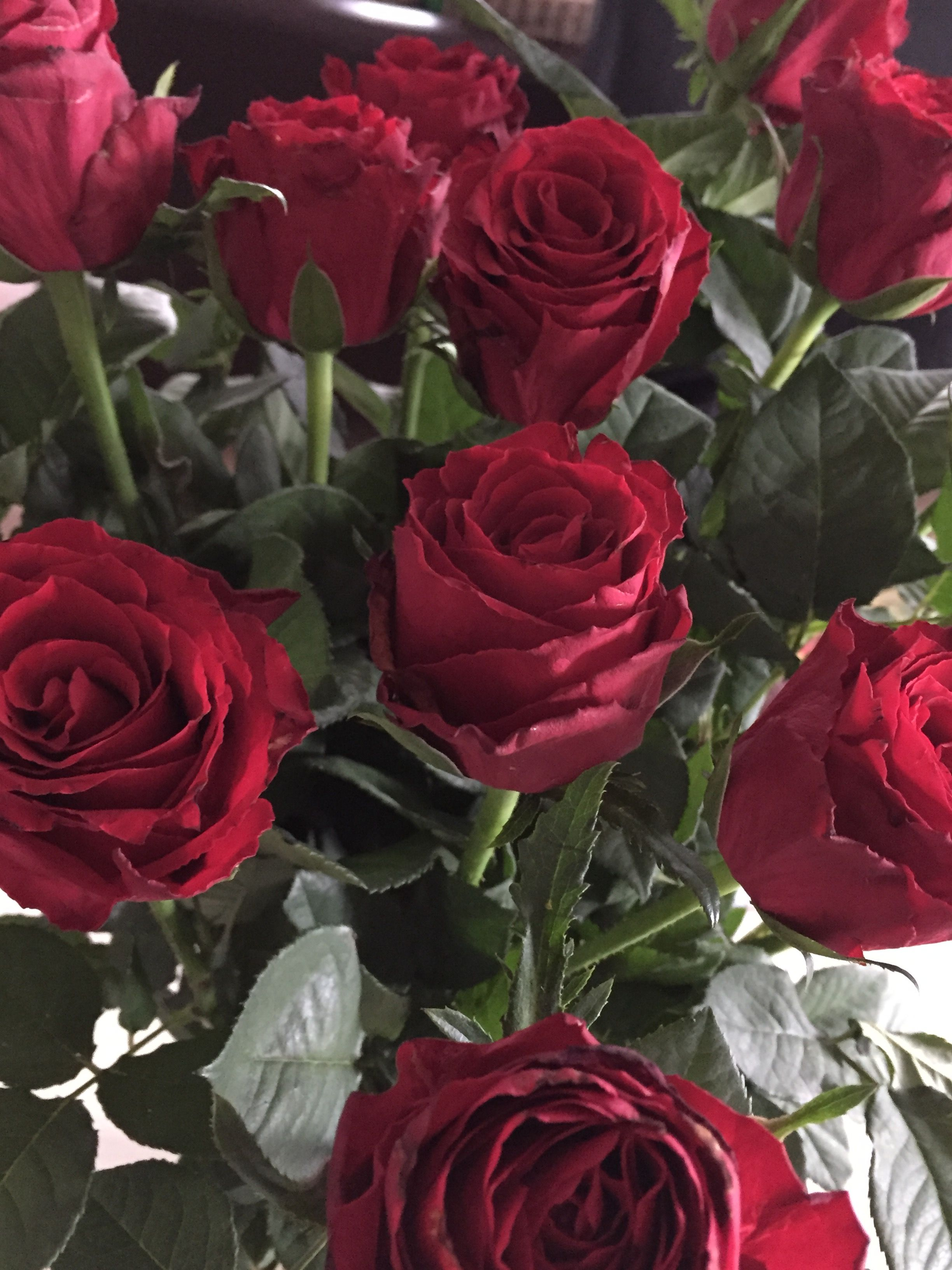 Pretty Red Roses Beautiful Roses And Flowers Pinterest