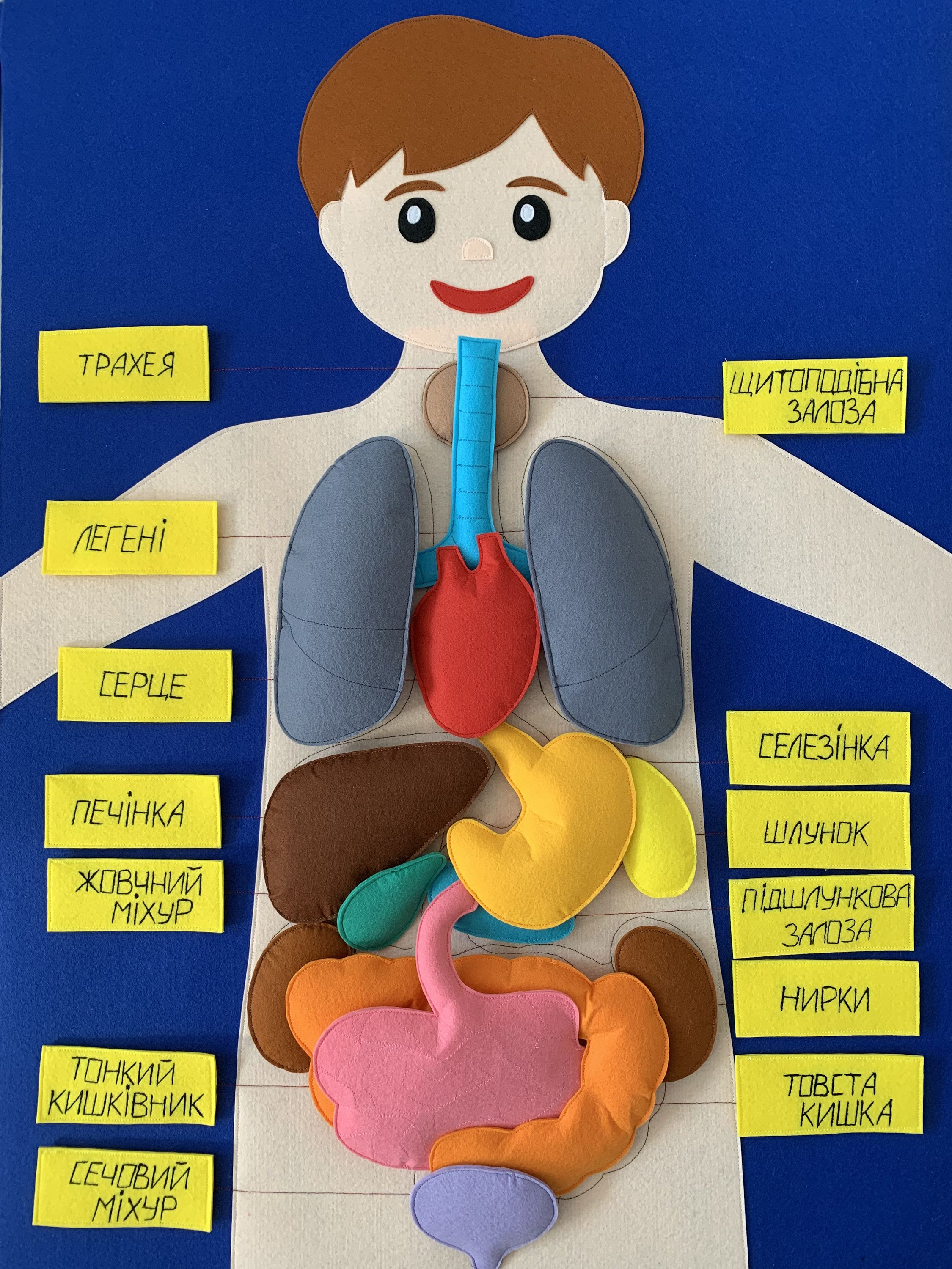 Felt Human Body Board Anatomy Materials Science Playmate Etsy In 2021 Art Activities For Kids Human Body Unit Study Art For Kids [ 3000 x 2250 Pixel ]
