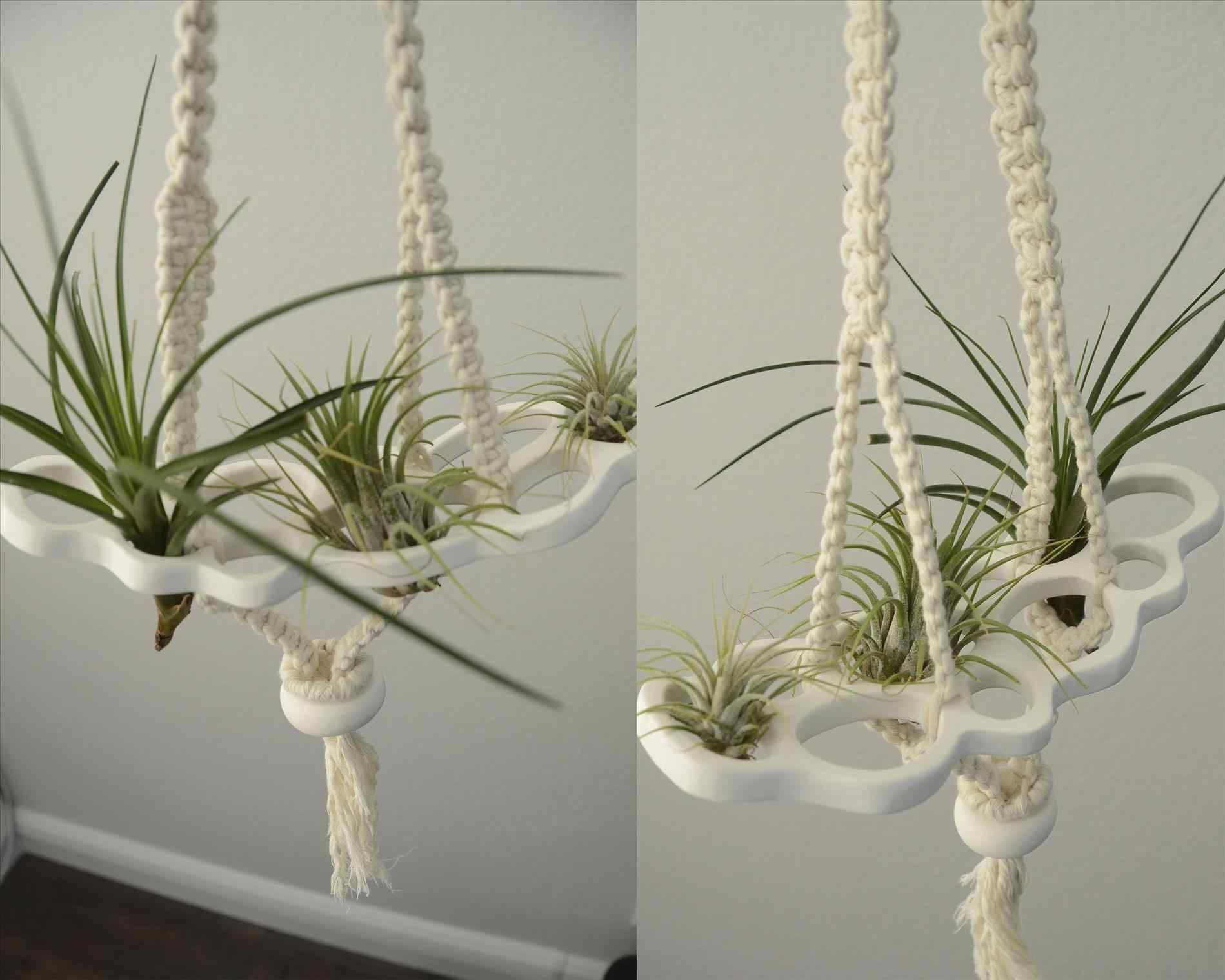 Epic Inspired Boho Air Plant Vertical Garden Ideas Httpsbreakprcom