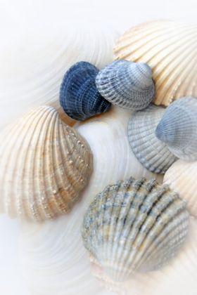 Just Sea Shells