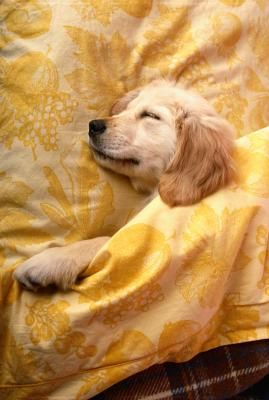 Can You Take Water Food From A Puppy At Night Sleeping Dogs Puppies Animals