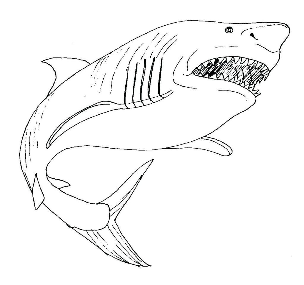 Shark Coloring Pages For Kids Shark Coloring Pages Animal