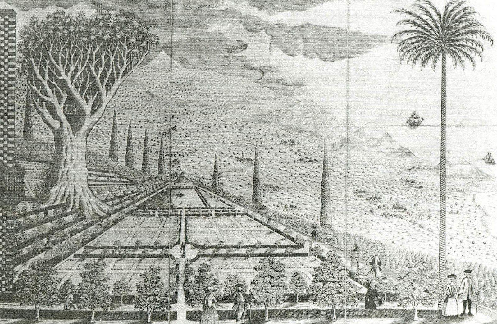 Drago de los jardines de franchy y palmera de la conquista la orotava tenerife islas canarias - Jardines de franchy la orotava ...