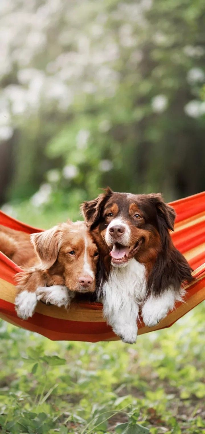 General Dog Care 1/5 A dog can be a wonderful addition to