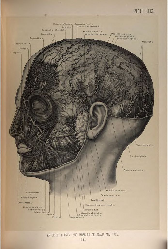 Surgical Anatomy of the Head and Neck 22fcad04dc4777f320ca02f2b6212ccb