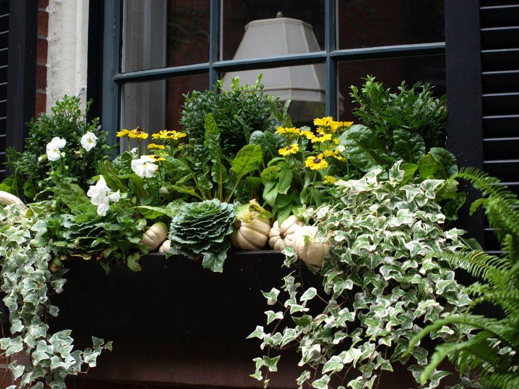 boston brownstones for fall window boxes pinterest. Black Bedroom Furniture Sets. Home Design Ideas