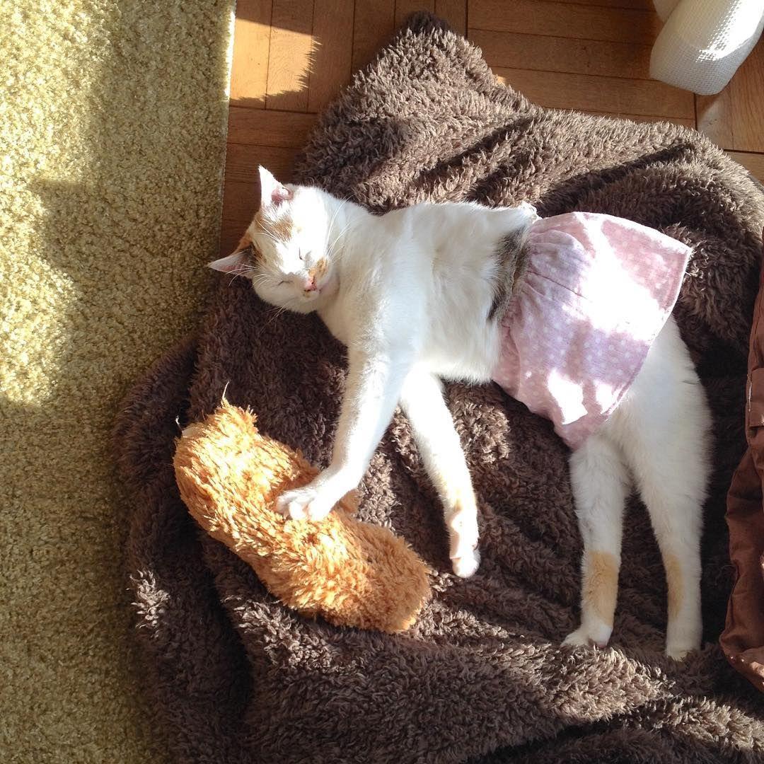 スタイルいいよッ、この顔も好きッ . #cat #猫 #懐かし写真 #これ好き #何度も見たい #猫村さん #スカートをはいた猫 .