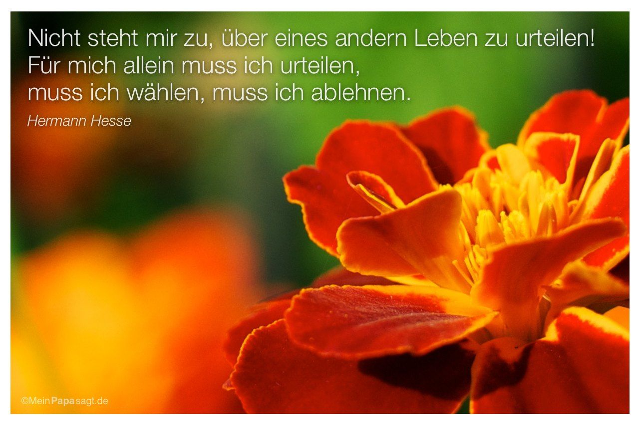 1000+ ideas about hermann hesse zitate on pinterest | hermann