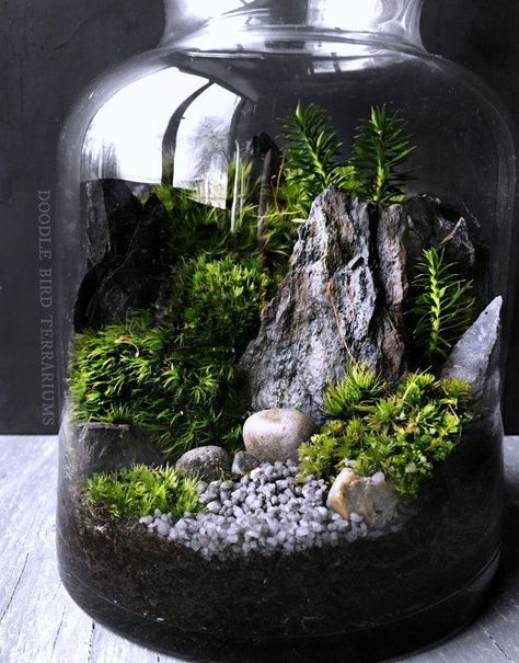 winter woodland forest scene terrarium with pine trees miniature gardens pinterest. Black Bedroom Furniture Sets. Home Design Ideas