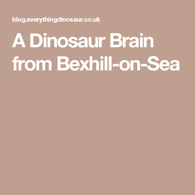 A Dinosaur Brain from Bexhill-on-Sea