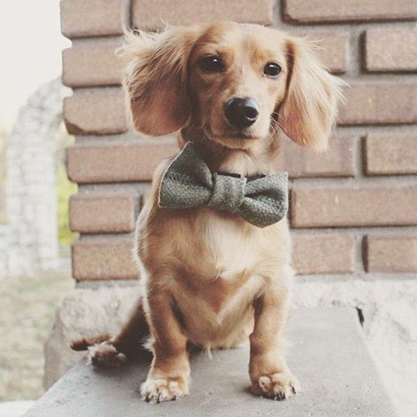 Handmade In London This Bow Tie Is Crafted Of Scottish Tweed And