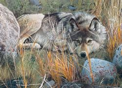 Carl Brenders - One to One Wolves Jigsaw Puzzle