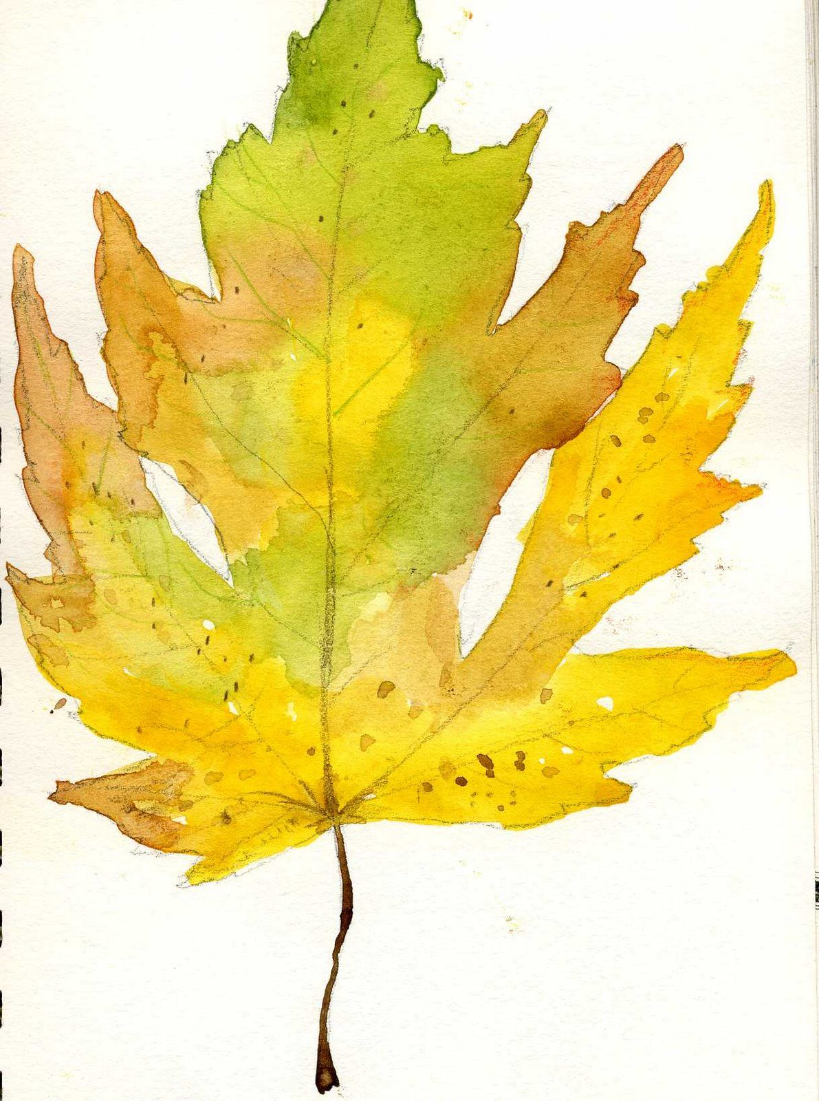 Maple leaf, watercolor | Crafty Crones | Watercolor art ...