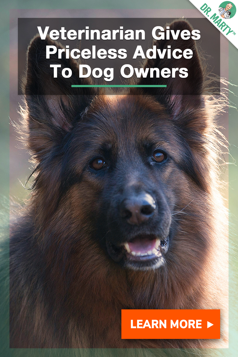 Vets Priceless Advice To Dog Owners Canine care, Dog