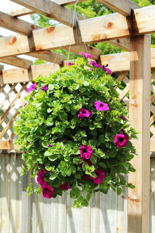 50 Best Front Garden Design Ideas In Uk Hanging Plants Hanging Garden Petunia Hanging Baskets