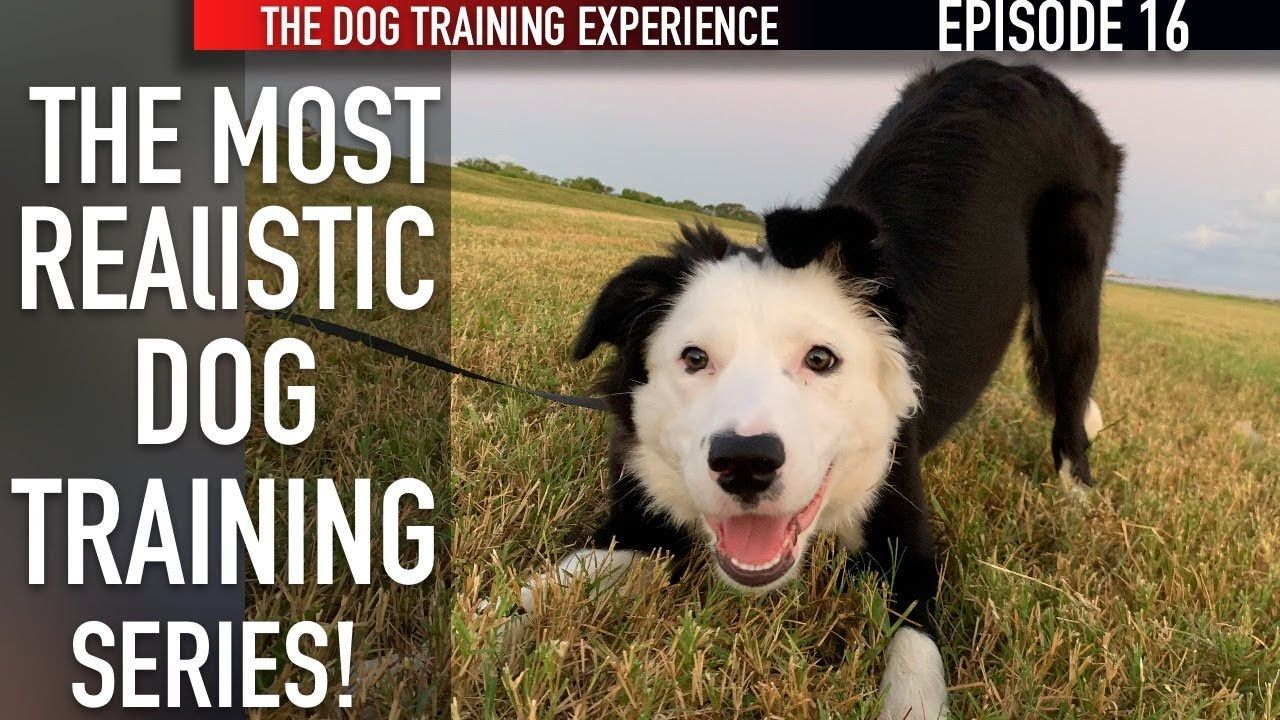 New Episode How I M Training My Puppy To Walk On Leash And Settle