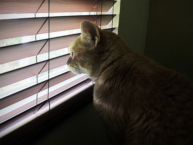 How To Keep Cats From Breaking Blinds Cats Best Blinds