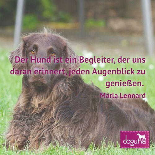 Der Hund Ist Ein Begleiter Der Uns Daran Erinnert Jeden Augenblick Zu Geniessen Marla Lennard Hund Hunde Dog Dogs Dogsofi Instagram Instagram Posts Nina