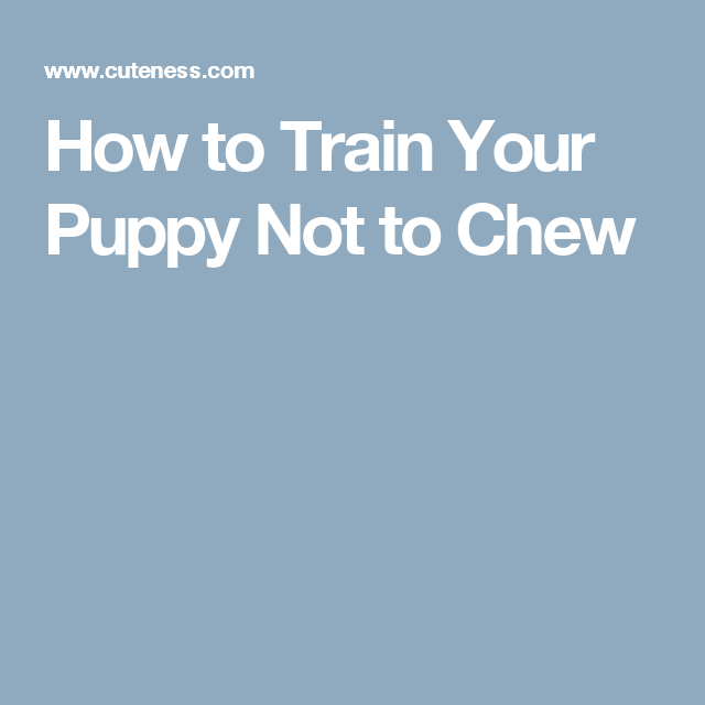 How To Train Your Puppy Not To Chew