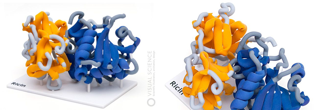 Ricin (via Forensic toxicology