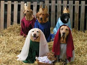Immagini Natalizie Con Cani.Con Un Pet In Casa Bisogna Ricordarsi Che I Cani Possono