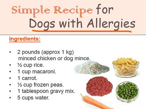 Simple Recipe For Dogs With Allergies Dog Food Recipes Make Dog