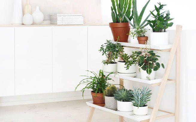 Dekoidee: Sukkulenten auf einem Pflanzenregal