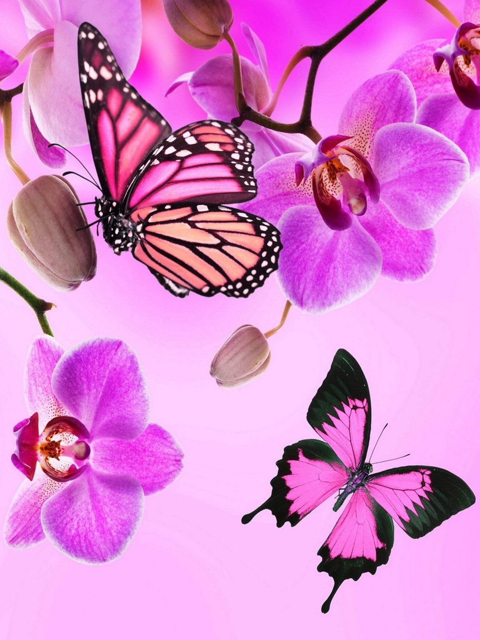 Pin by wendy wharton on butterfly wallpaper pinterest wallpaper stylish pink live wallpapers backgrounds hd quality girly theme lock screen wallpaper on the app store altavistaventures