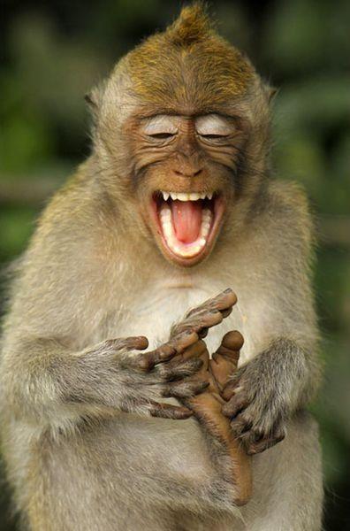 Monkey having sex youtube