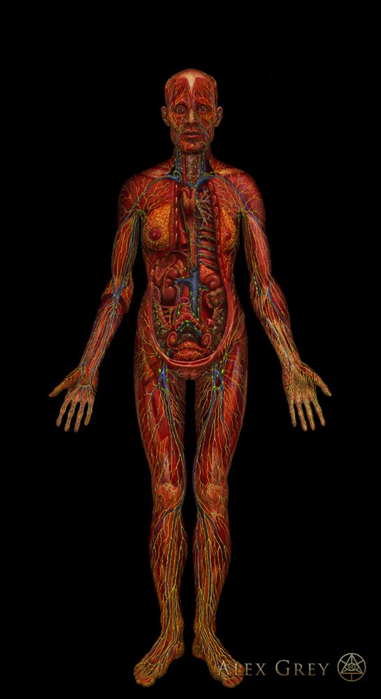 Alex Grey\'s Lymphatic System: Painting, 1985, Oil on Linen, 84 x 46 ...