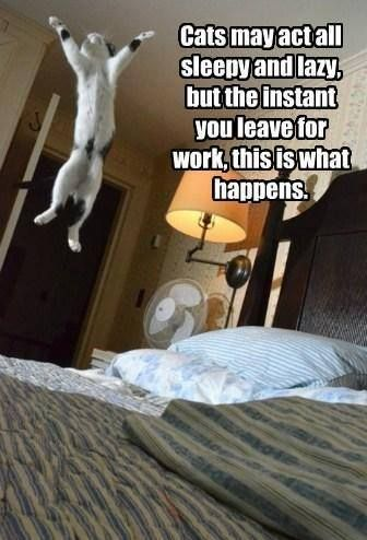 This is what happens... when you're not at hom  All about #cats #dogs #pets click here