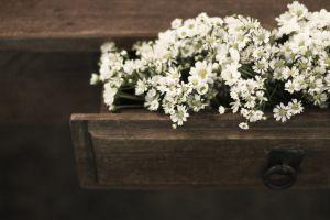 Flores na gaveta